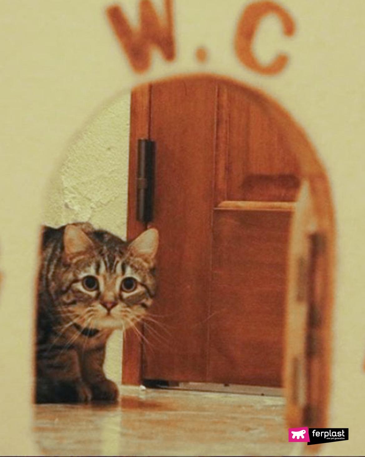 город кот измерение
