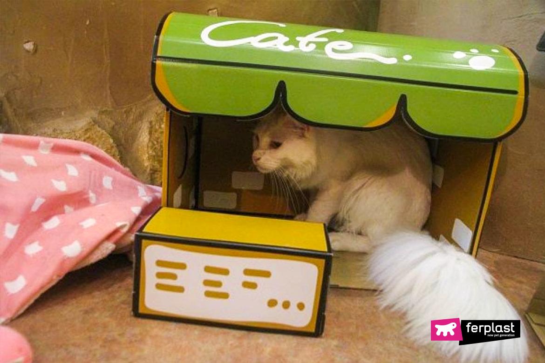 Япония кот токио