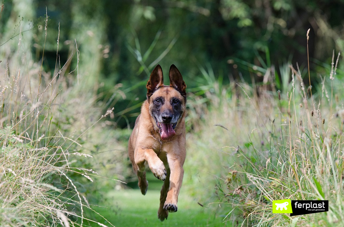 If You Should See A Red Dog Running Free