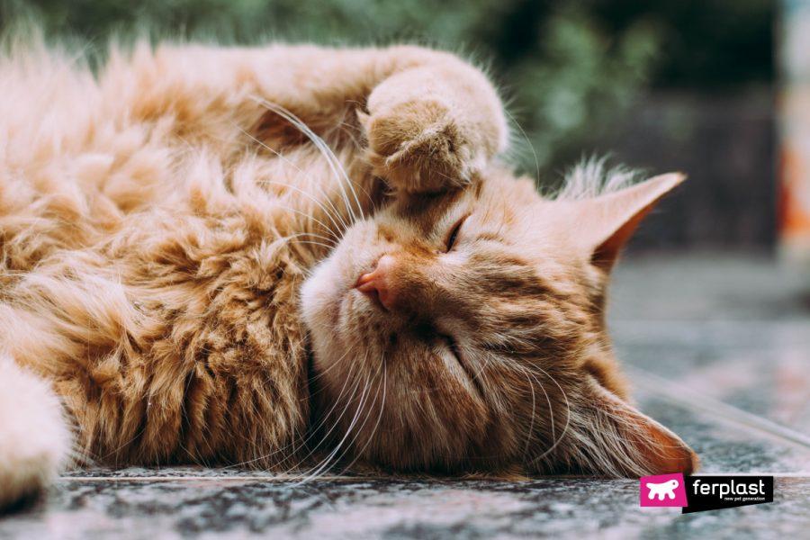 I gatti sudano in estate