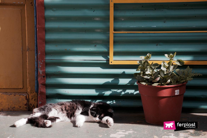 Perché i gatti ci seguono in bagno u i miei animali
