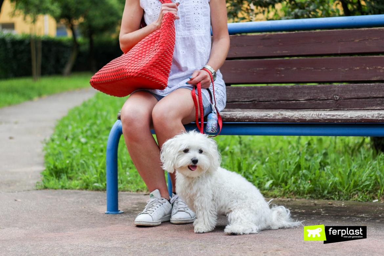passeggiata con cane al parco