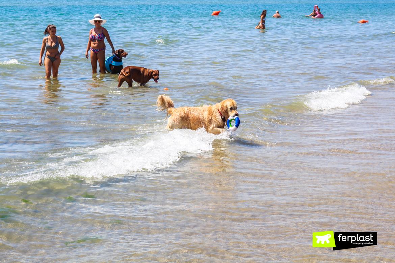 итальянские пляжи pet friendly