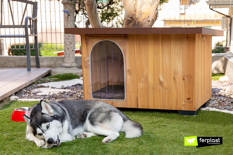 Come Costruire Una Cuccia cucce da esterno in legno per cani, modelli migliori