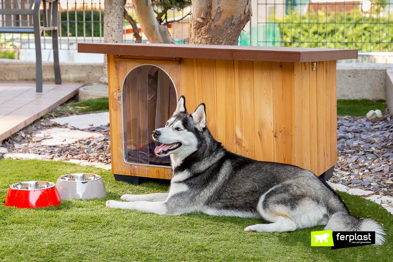 Animali Da Esterno cucce da esterno in legno per cani, modelli migliori