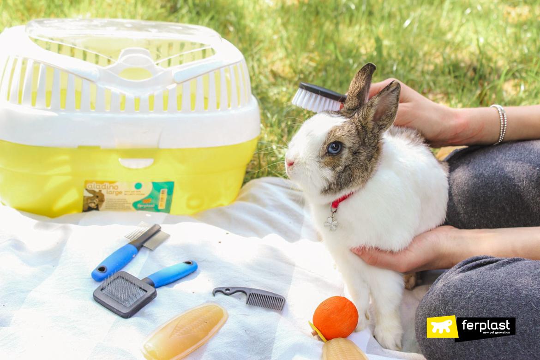 как заботиться о шерсти кролика