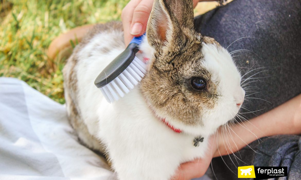 CARING FOR YOUR RABBIT'S COAT IN AUTUMN: THE BEST BRUSHES