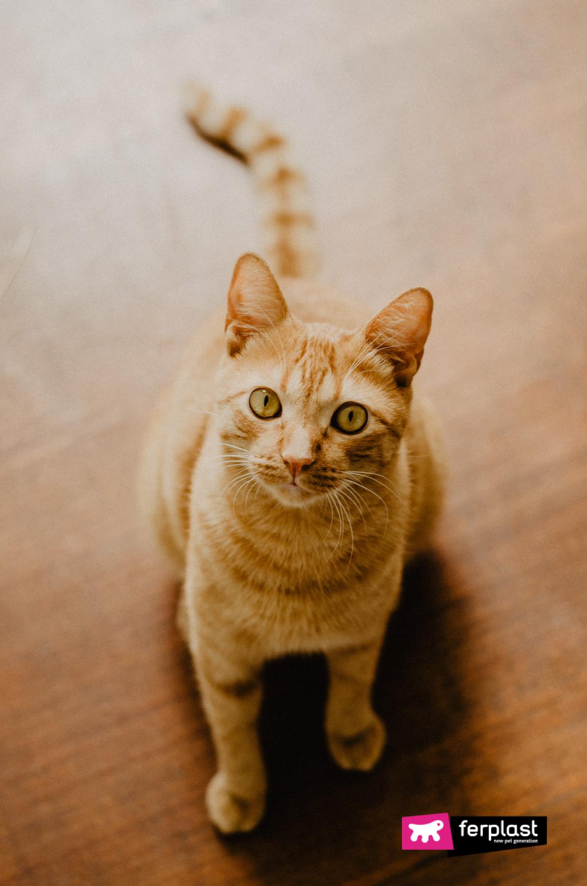 5 Motivi Per Cui I Gatti Rossi Sono I Migliori