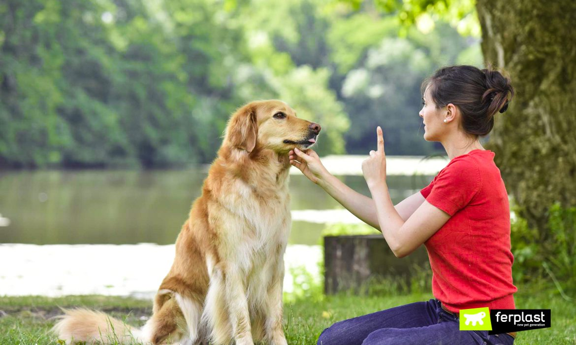 WHAT WORDS CAN DOGS LEARN?
