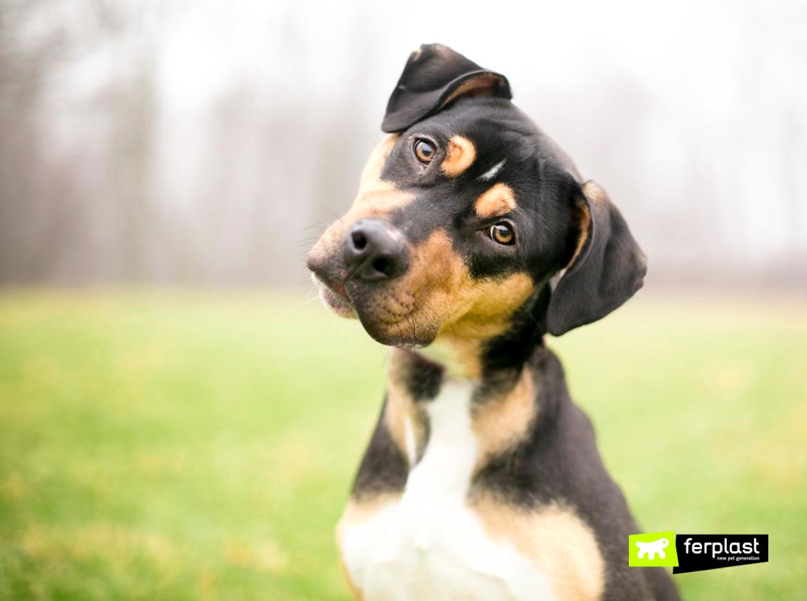 собаки понимают значение слов?