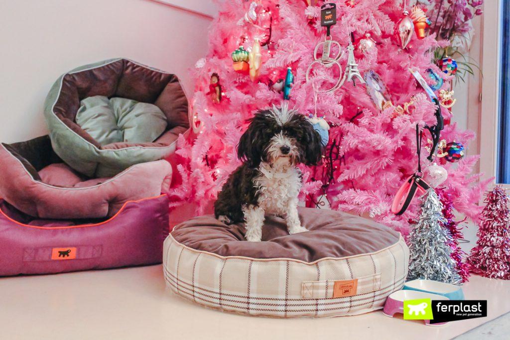Idee Regalo Natale Basso Prezzo.Natale 2018 Idee Regalo Originali E A Basso Prezzo Per Il Tuo Cane
