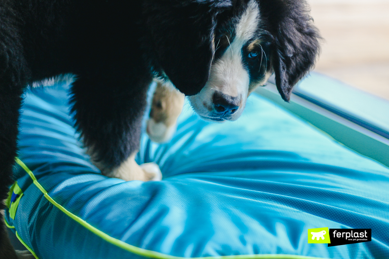 лежанки для собак из антицарапающегося материала