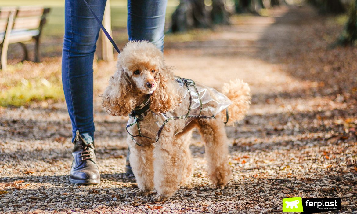 IS WALKING IN THE RAIN GOOD FOR YOUR DOG? THE BEST AUTUMN RAINCOATS!