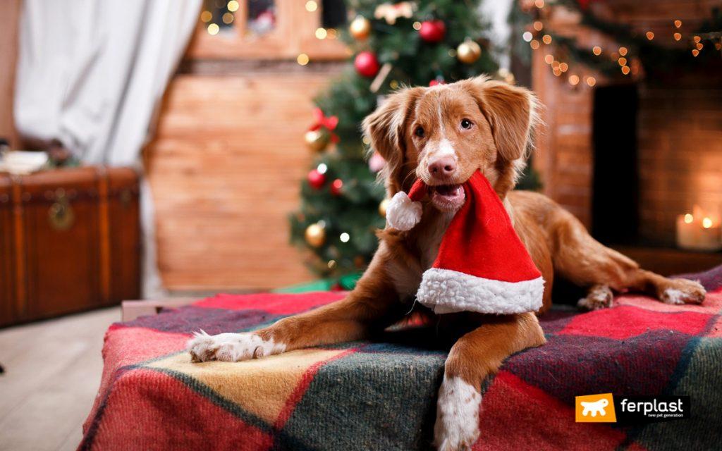 Animali Natale Immagini.Animali E Natale Quali Sono I Pericoli