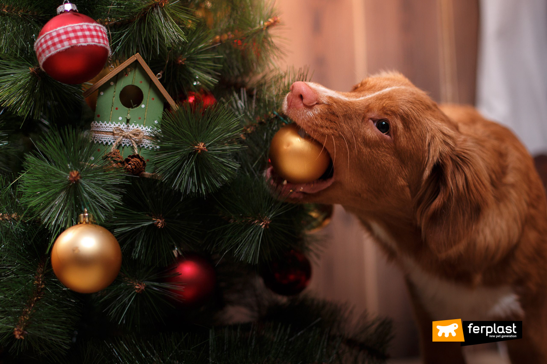 Immagini Animali Natale.Animali E Natale Quali Sono I Pericoli