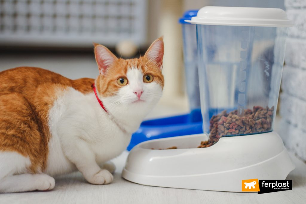 The Dry Food Dispenser That Every Cat And Dog Would Like To Have
