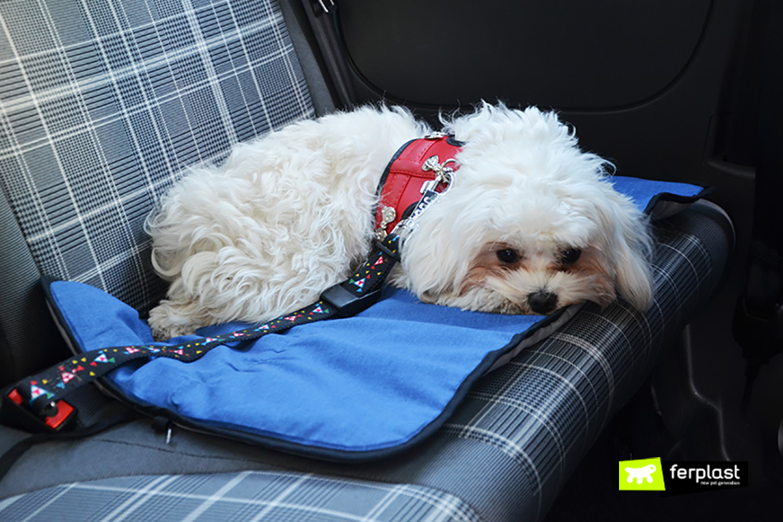 voyager en voiture avec votre chien ceinture ou panier. Black Bedroom Furniture Sets. Home Design Ideas