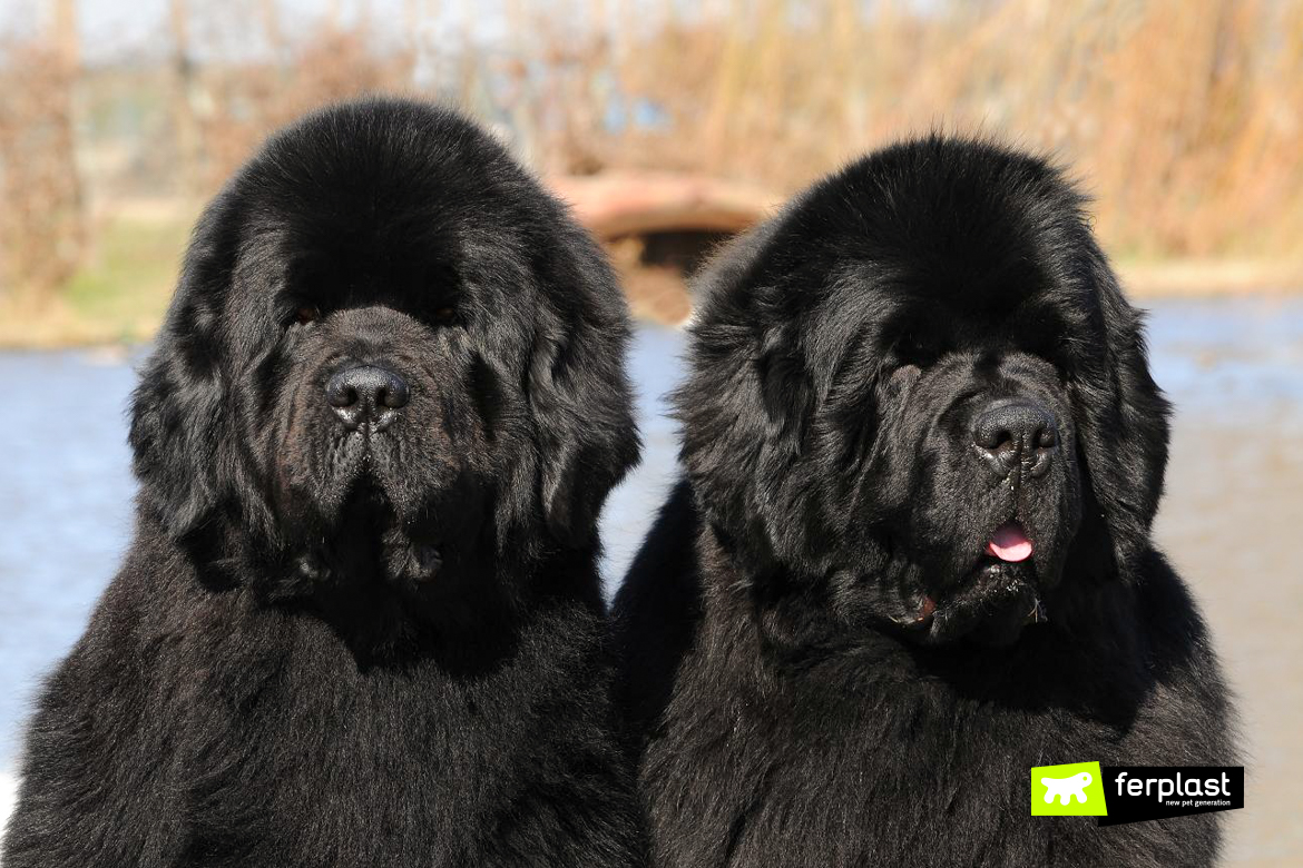 The World's Largest Dog Breeds, The Complete List