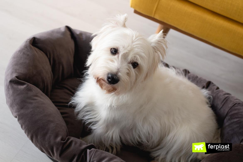 Лежаки для собак от Ferplast