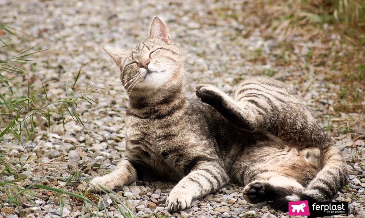 DERMATITIS IN CATS: CAUSES AND TREATMENTS