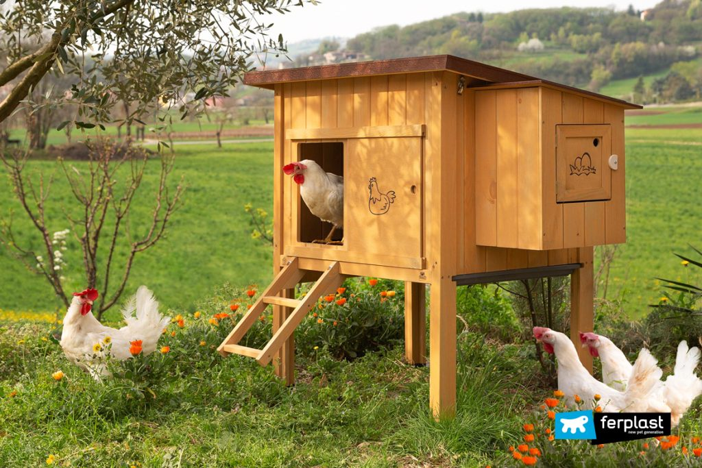 Organic Eggs Throughout The Year: Egg-Laying Hens In The Garden
