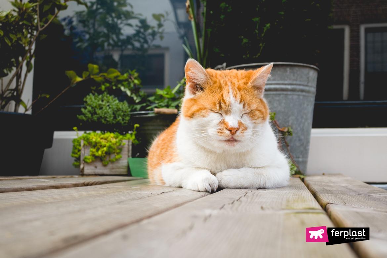 Летом кошки обычно едят меньше