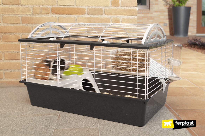 onde dormen eu porquinhos da india caja segura