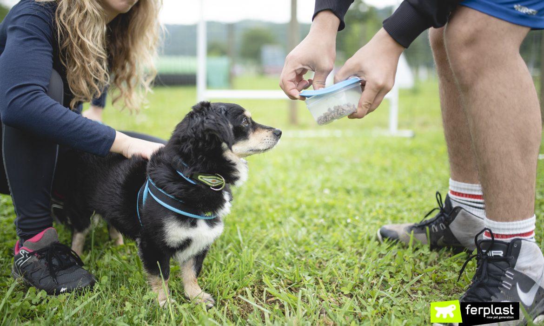 SPORT MIT EINER DOG: MANTRAILING
