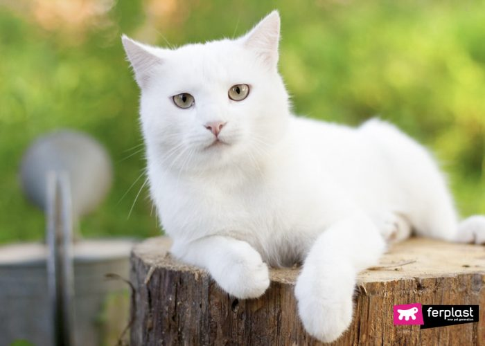 WHITE CATS AND THE SUN… WHAT PRECAUTIONS TO TAKE
