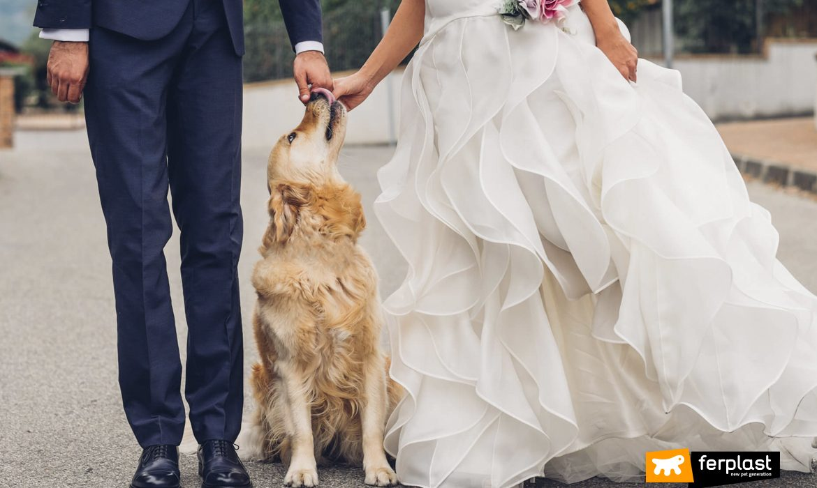 THE WEDDING DOG SITTER