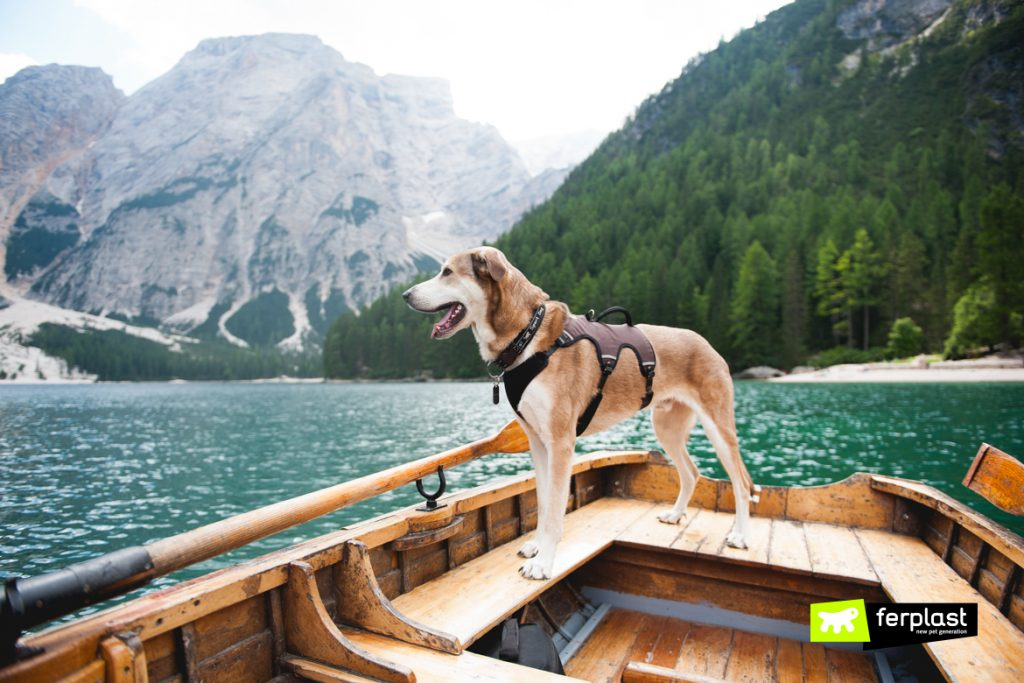 montagna con cane