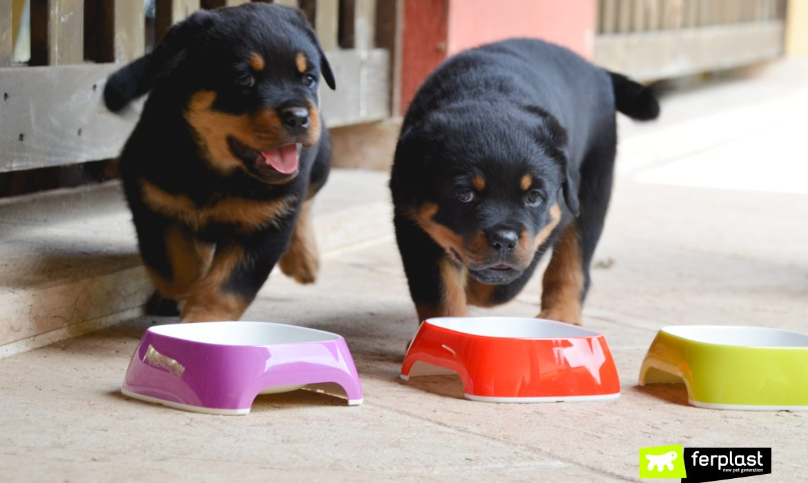 WEANING A PUPPY: WHAT TO DO