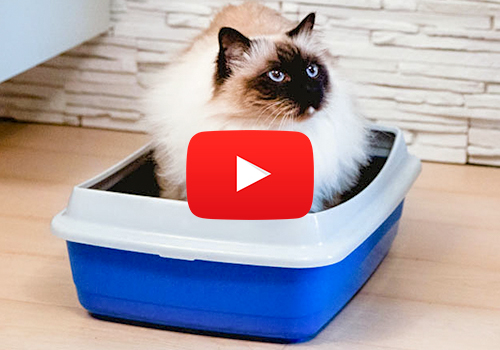 ARIEL: LITTER TRAY WITH SIEVING SYSTEM