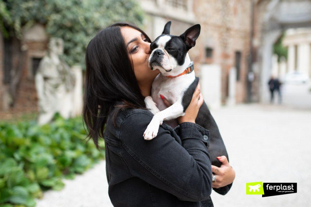 Boston Terrier Origins And Behaviour