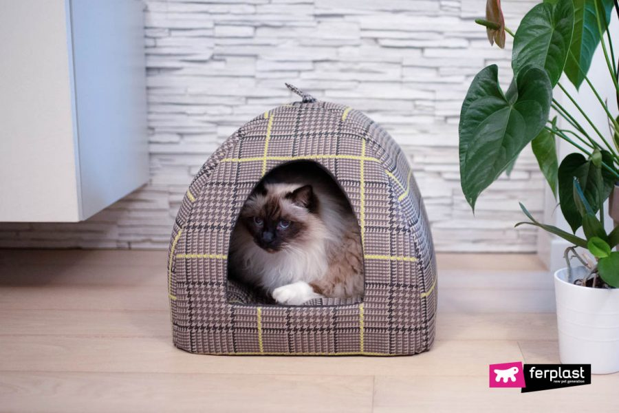 Conselhos de compra esconde esconde gato