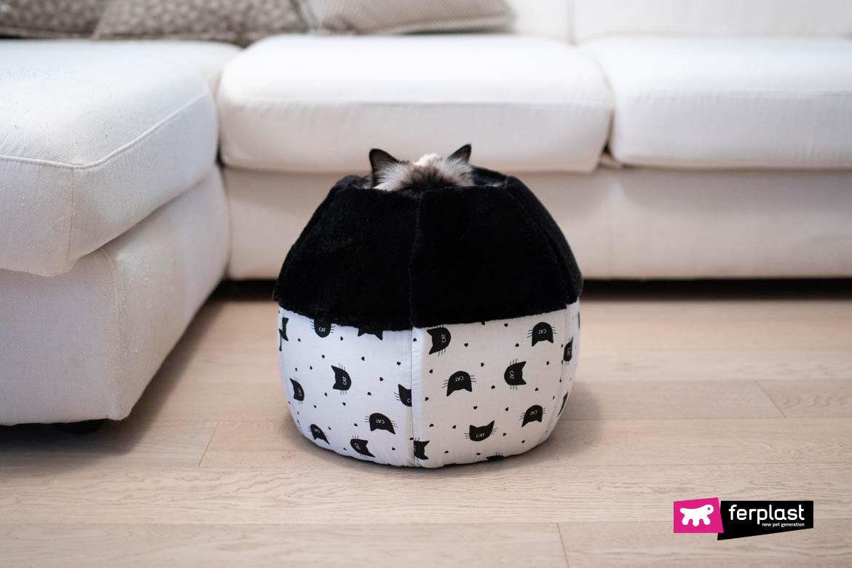 gato cama espaço orelhas fantasia branco preto