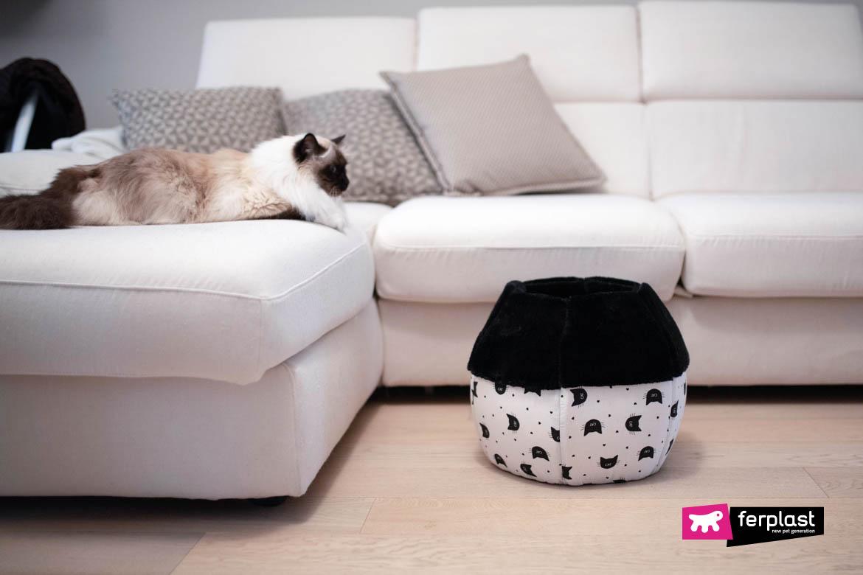 habilidade gato esconder lugar canil