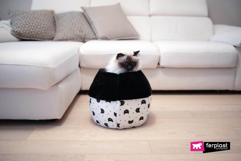 canil fechado gato guia de compra