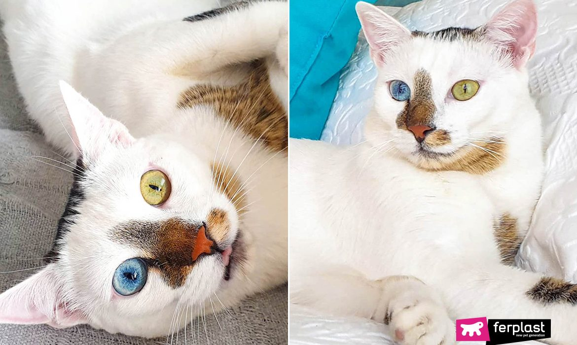BOWIE THE CAT, THE AMAZING STORY OF THE CAT WITH DIFFERENT EYES