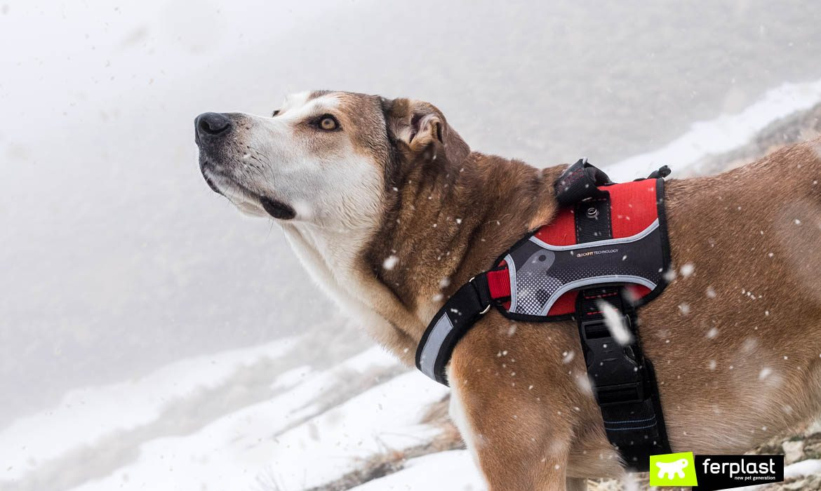DOG AND SNOW: THE 4 BEST GAMES TO MAKE IT FUN