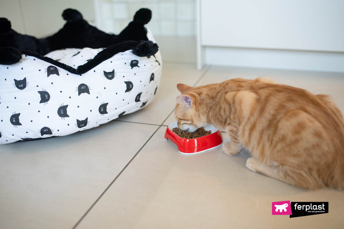 How Much Must The Cat Eat Recommended Daily Dose
