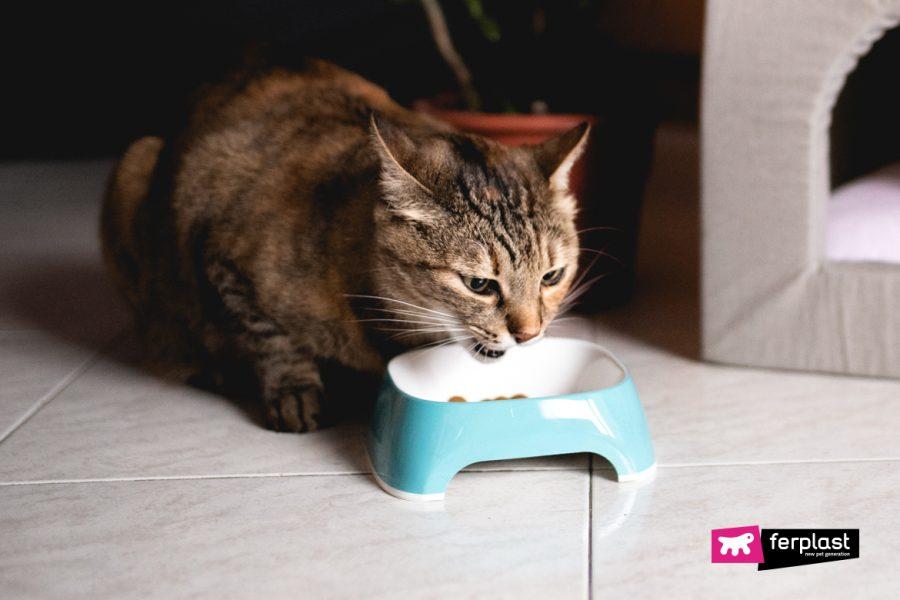gato come com pressa: soluções para desacelerá-los