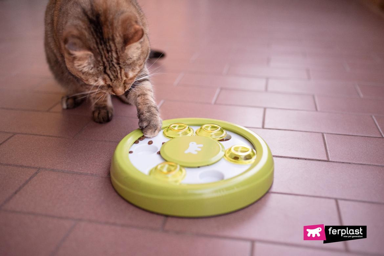 ração de gato interativo