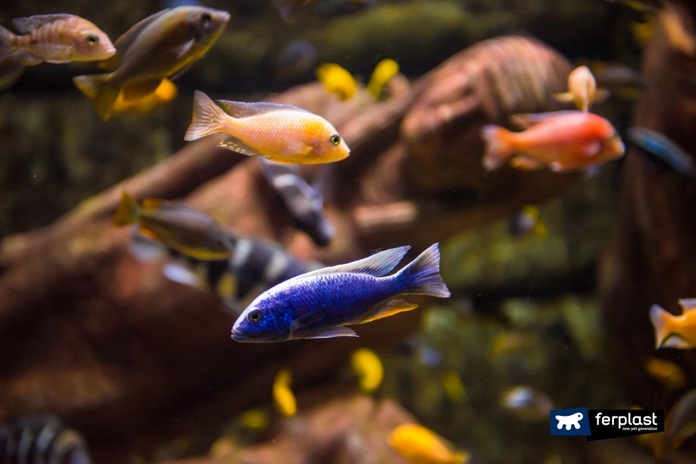 Aquário com peixes coloridos