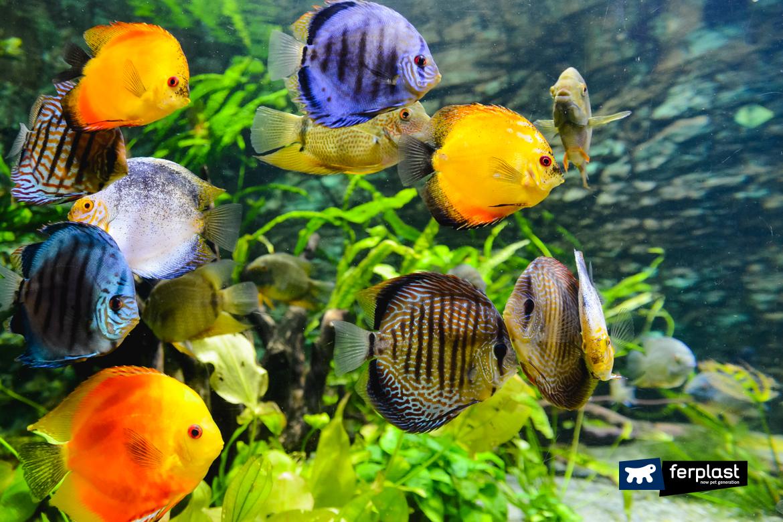 Aquário em casa peixe que escolher