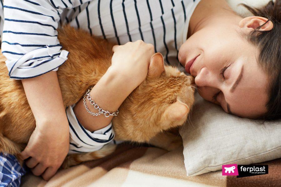 Кошка Будит Меня На Рассвете