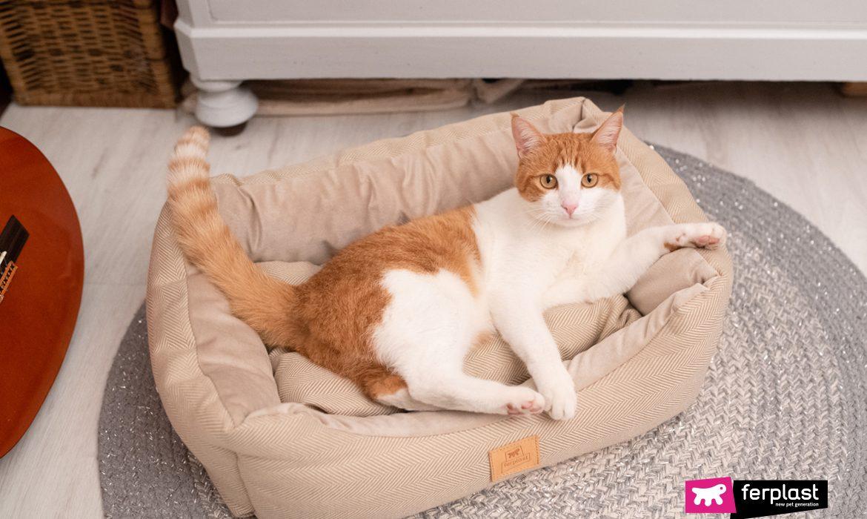DO CATS DREAM WHEN THEY SLEEP?