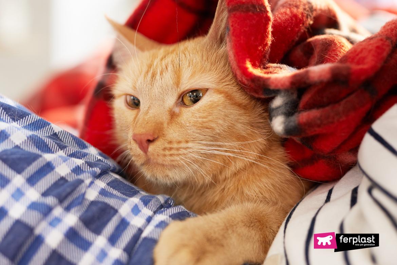 причины, почему кот всегда будит меня