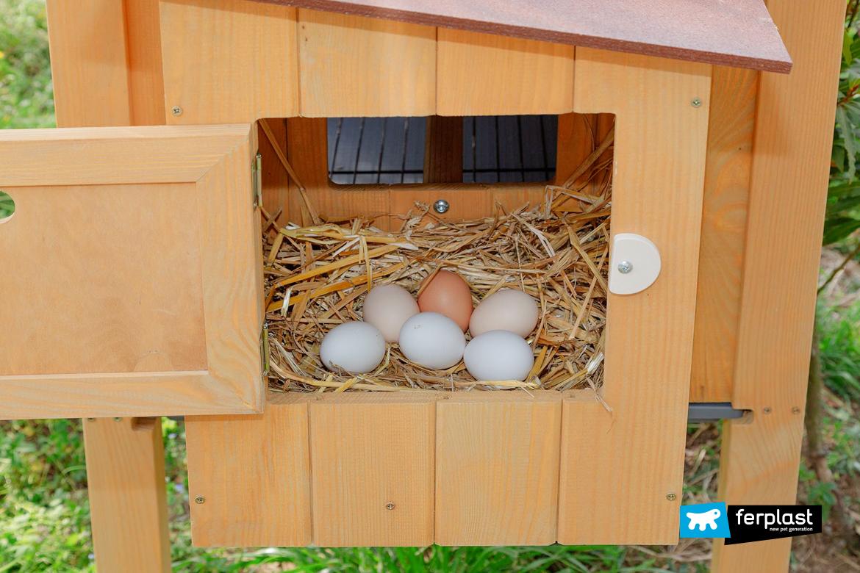 Les Raisons pour lesquelles les poules ne pondent plus d'œufs