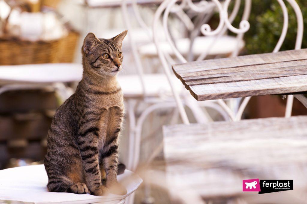 Adopter Un Chat Errant La Primiere Visite Chez Le Veterinaire